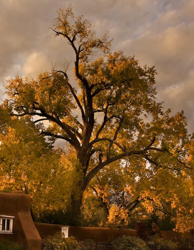 Galisteo Autumn