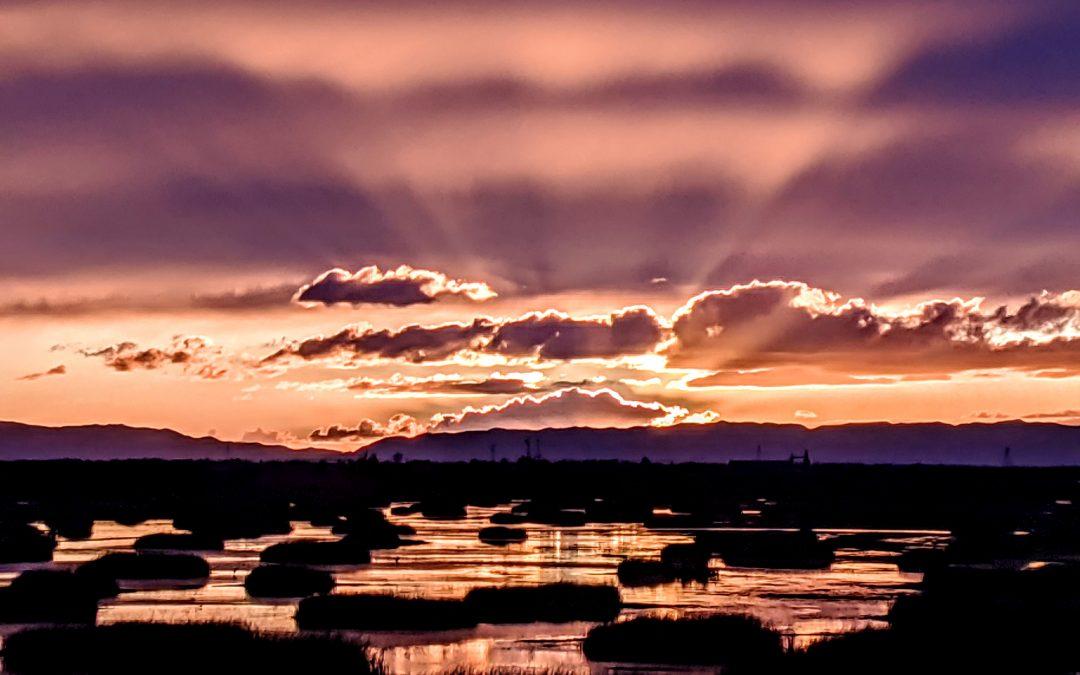 California Wetlands